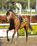 20 March 2010: Storm Play after the Appleton Stakes at Gulfstream Park in Hallandale Beach, FL.