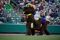 DogZerk performs during a Rochester Red Wings International League game against the Charlotte Knights on June 16, 2019 at Frontier Field in Rochester, New York.  Rochester defeated Charlotte 3-2 in the second game of a doubleheader.  (Mike Janes/Four Seam Images)
