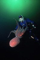Diver and Giant Pacific Octopus (Octopus dolfleini) underwater in Jervis Inlet, British Columbia, Canada.