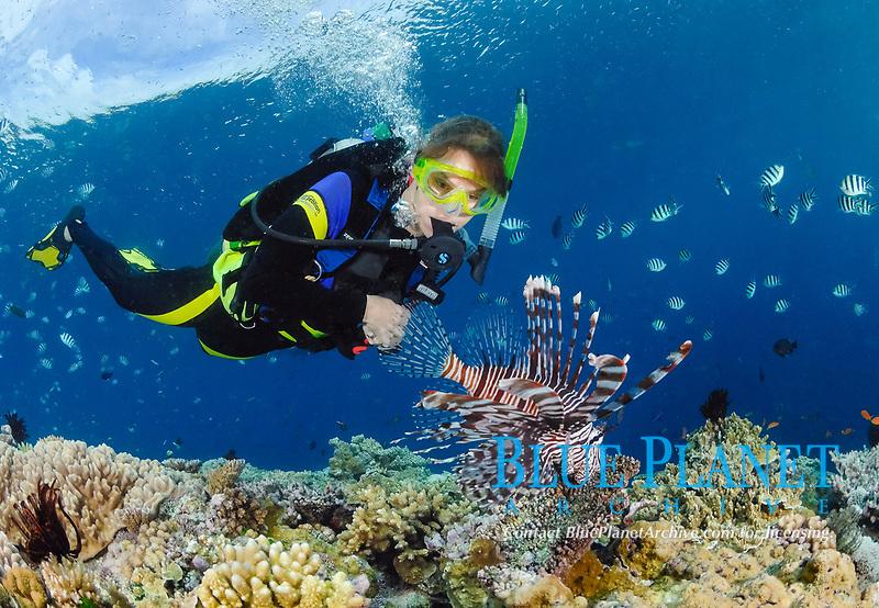 Scuba diver and common lion fish, Pterois volitans, Great Barrier Reef, Australia, Pacific Ocean, MR