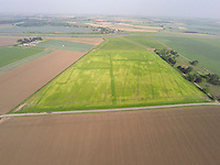 Sugar beet crop showing affects from previous cropping / field activity - Lincolnshire, August