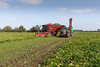 17.9.2020 Contractor Richard Ivatt starts lifting beet in the 2020 campaign.<br /> ©Tim Scrivener Photographer 07850 303986<br />      ....Covering Agriculture In The UK.