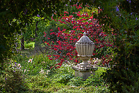 Urn in secret garden room of Los Angeles Botanic Garden framed by Cercis canadensis 'Forest Pansy' Redbud tree