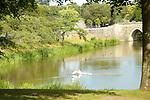 misc swan
