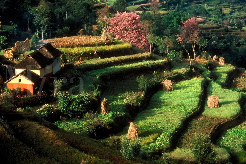 Terraced fields with houses, in spring, Kathmandu, Nepal.