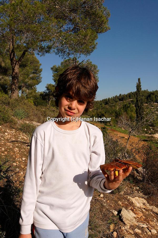 Israel, Jerusalem Mountains. Picking mushrooms on Har Haruach, the Mountain of Wind