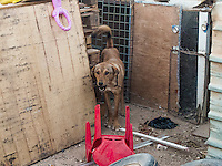 A Dog in Za'atari Camp.<br /> I saw a big dog in Za'atari camp and nobody else sees it.