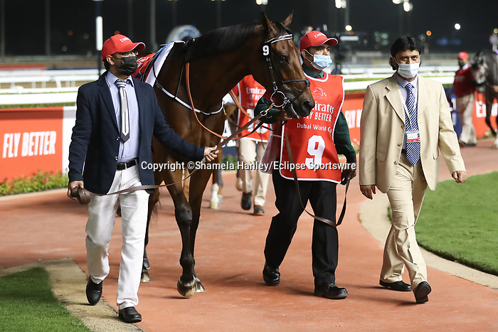 March 27 2021: MILITARY LAW #9, in the post parade for the Dubai World Cup at Meydan Racecourse, Dubai, UAE. Shamela Hanley/Eclipse Sportswire/CSM