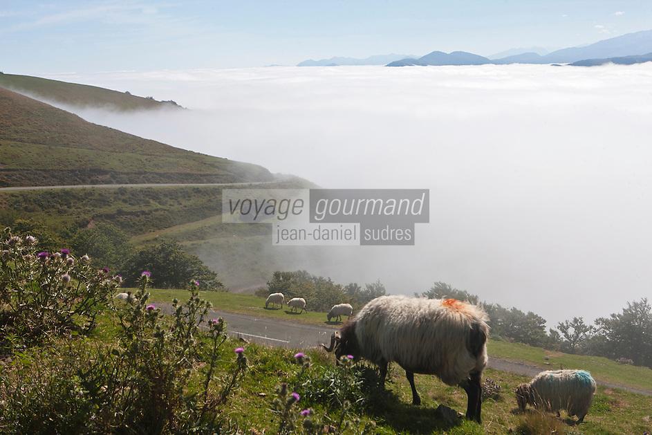 Europe/France/Aquitaine/64/Pyrénées-Atlantiques/Pays-Basque/Iraty: Moutons sur les pentes du Col d' Orgambideska