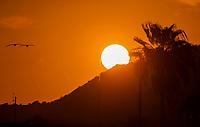 The sun hides at sunset behind a hill and palm tree in Bahia Kino in Sonora, Mexico (Photo: Luis Gutierrez / NortePhoto.com).<br /> <br /> Sol se esconde al atardecer tras cerro y palmera en  bahia Kino en Sonora, Mexico.(Photo: Luis Gutierrez / NortePhoto.com).