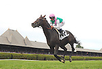 Flintshire (no. 2), ridden by Javier Castellano and trained by Chad Brown, wins the 58th running of the grade 2 Bowling Green Handicap for four year olds and upward on July 30, 2016 at Saratoga Race Course in Saratoga Springs, New York. (Bob Mayberger/Eclipse Sportswire)