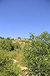 Israel, Jerusalem mountains, Ein Giora in Nahal Ktalav