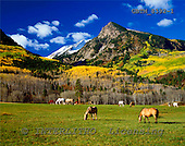 Tom Mackie, LANDSCAPES, photos, Grazing Horses & Rocky Mountains, Redstone, Colorado, USA, GBTM8392-1,#L#