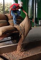 AGRI Raccolta di nocciole. Hazelnuts harvest