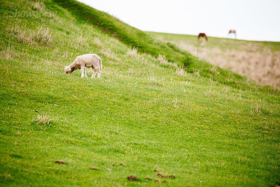Image Ref: CA852<br /> Location: Dunkeld<br /> Date of Shot: 07.08.19