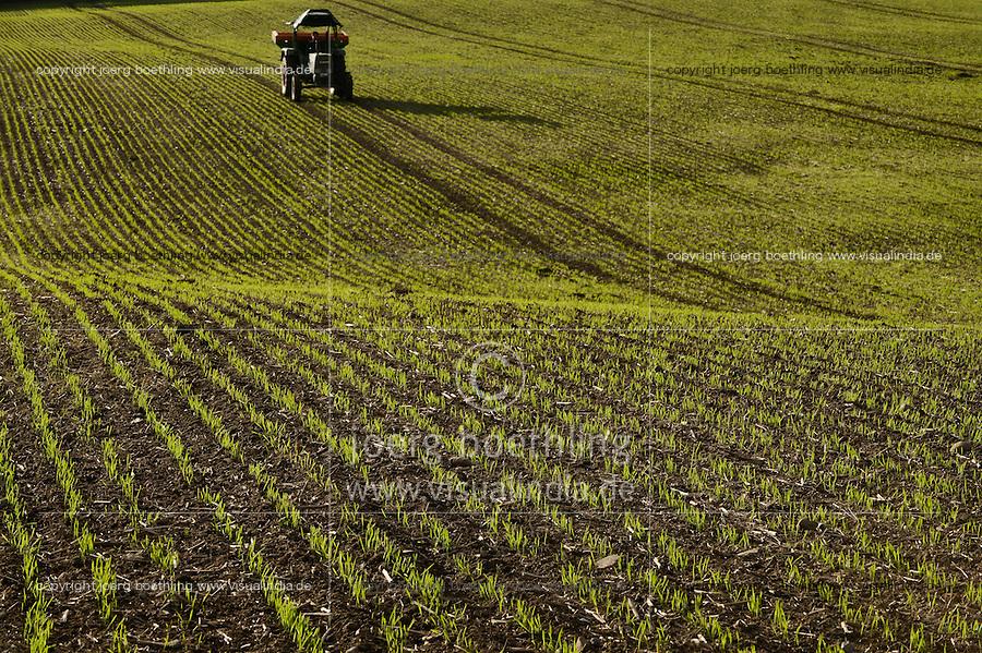GERMANY barley field in Scheggerott near Kappeln/ Deutschland Schleswig Holstein, Feld mit jungen Gerste Pflanzen