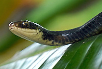 A Black Snake in a Bird of Paradise in Holly Hill, FL, photographed with a Lumix GF1 Micro Four Thirds camera, June 27, 2010.  (Photo by Brian Cleary/www.bcpix.com)