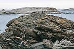 Osprey pair sit on nest built on a rock ledge, Boothbay Harbor, Maine.