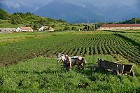 ROMANIA Transylvania Voila, farmer with horse wagon  / RUMAENIEN Transsilvanien Siebenbuergen, Voila, Bauer mit Pferdewagen, Hintergrund Fagaras Gebirge