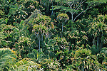 You can walk through the vacoas, latanier or palmiste trees and also through the female rounded fruits ?coco de mer? groves and the filiform inflorescences male ones. May Valley. Praslin island