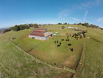 Calf marking and branding the Doug & Loree Joses at the Plasse Ranch near Jackson, Calif.<br /> <br /> Photographed from above using a sUAV/quadcopter.