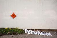 COMPONENTI IN CARTAPESTA LASCIATI AD ASCIUGARE AL SOLE.<br /> Il carnevale di Gallipoli è tra i più noti della Puglia. La sua tradizione è antichissima ed è documentata, oltre che in atti e documenti settecenteschi, anche da radici folcloristiche che affondano le origini in epoca medioevale, tramandate fino ad oggi dallo spirito popolare. La prima edizione (per come la conosciamo) risale al 1941; nel 2014 sarà l'edizione numero 73.<br /> La manifestazione carnascialesca è organizzata dall' Associazione Fabbrica del Carnevale, nata nel febbraio 2013 con la finalità diorganizzare, promuovere e riportare in auge il Carnevale della Cittàdi Gallipoli. L'Associazione raccoglie al suo interno i maestri cartapestai Gallipolini e tanti giovani artisti, che vogliono valorizzare il Carnevale della città bella. Presidente dell'Associazione è Stefano Coppola.<br /> La manifestazione ha inizio il 17 gennaio, giorno di sant'Antonio Abate (te lu focu = del fuoco), con la Grande Festa del Fuoco, quando si accende con la tradizionale focara, un grande falò di rami d'ulivo. L'ultima domenica di carnevale e il martedì grasso lungo corso Roma, nel centro cittadino, si svolge la sfilata dei carri allegorici in cartapesta e dei gruppi mascherati corso Roma davanti a migliaia di spettatori provenienti da tutta la provincia di Lecce e da città pugliesi. Il tema dell'edizione di quest'anno è un omaggio a Walter Elias Disney.<br /> <br /> COMPONENTS IN CARDBOARD LEFT TO DRY IN THE SUN.<br /> The Carnival of Gallipoli is among the best known of Puglia. Its tradition is very old and is documented , as well as records and documents in the eighteenth century , as well as folkloric roots that sink their roots in medieval times , handed down today by the popular spirit . The first edition dates back to 1941 and in 2014 will be the edition number 73 .<br /> The carnival is organized by the Association of Carnival Factory , founded in February 2013 with the objective to organize, promote and revive t