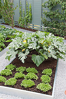 Fruit trees trellis espaliered in vegetable garden landscape, with raised beds of zucchi, looseleaf lettuces, white stone paths