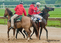 Luckyemail with Silja Storen aboard acting up before The International Ladies Fegentri Race at Delaware Park on 6/10/13 - outriders Lance Parot and Colby Lavergne straighten her out - good job