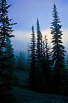 Dawn breaks in fog in a forest and meadow area of Olympic National Park. Olympic Peninsula