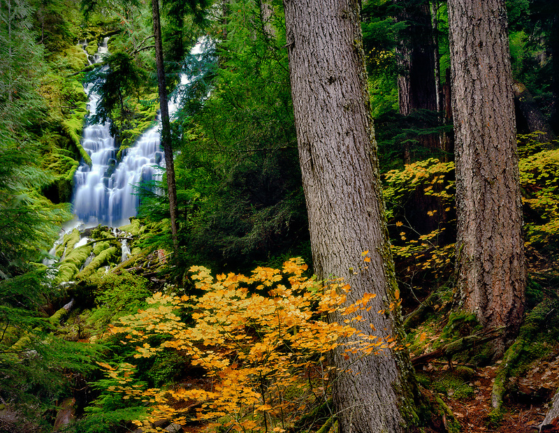Upper Proxy Falls with fall color. Three Sisters Wilderness. Willamette National Forest. Oregon.