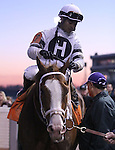 Will Take Charge and jockey Luis Saez after G1 Clark Handicap win.<br /> November 29, 2013.