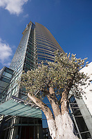 Asie/Israel/Tel-Aviv-Jaffa: Olivier et Millenium Towers