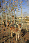 Israel, Southern Coastal Plain. The zoo at Lachish Park on the southern bank of Lachish stream