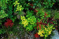 Jasper National Park Flora