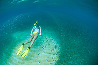 Snorkeler in a school of fry fish<br /> Virgin Islands