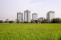 - Milano, Parco Agricolo Sud, risaie, sullo sfondo palazzi per uffici in via Ripamonti<br /> <br /> - Milan,  Agricultural Park South, rice fields, at background office buildings in Ripamonti street