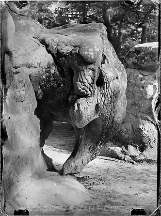 A sandstone rock that looks remarkably like an elephant is seen along Denecourt Trail number 6 (sentier Denecourt n°6, Les Gorges d'Apremont) in the Fontainebleau forest of France near Barbizon. Along the trails and in the guides created by Claude François Denecourt, he lists interesting rock formations and other curiosities.