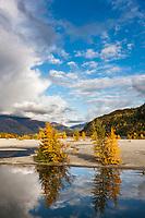 Autumn colors along the Knik River, southcentral, Alaska
