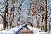 Wanderer in verschneiter Allee, Alt Töplitz, Insel Töplitz, Werder/Havel, Potsdam-Mittelmark, Havelland, Brandenburg, Deutschland