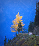 A truck passes a yellow leafed tree along the Going To The Sun Highway through Glacier National Park in Montana