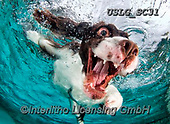 REALISTIC ANIMALS, REALISTISCHE TIERE, ANIMALES REALISTICOS, dogs, paintings+++++SethC_Flynn_Jenner320B7554rev,USLGSC31,#A#, EVERYDAY ,underwater dogs,photos,fotos ,Seth