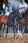 DEL MAR,CA-SEPTEMBER 03: Union Strike,ridden by Martin Garcia,is preparing before the Del Mar Debutante at Del Mar Race Track on September 03,2016 in Del Mar,California (Photo by Kaz Ishida/Eclipse Sportswire/Getty Images)