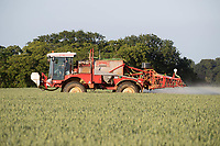 15-6-2021 Spraying fungicide in the cool air of the late evening at growth stage T3 onto Winter wheat in Rutland<br /> ©Tim Scrivener Photographer 07850 303986<br />      ....Covering Agriculture In The UK....