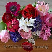 Gisela, FLOWERS, BLUMEN, FLORES, photos+++++,DTGK2333,#F#, EVERYDAY