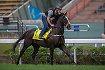 DEC 12,2015: Sole Power ,trained by Edward Lynam,exercises in preparation for the Hong Kong Sprint at Sha Tin in New Territories,Hong Kong. Kazushi Ishida/ESW/CSM