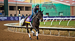 DEL MAR, CA - NOVEMBER 01: Elate, owned by Claiborne Farm & Adele Dilschneider and trained by William I. Mott, exercises in preparation for Longines Breeders' Cup Distaff at Del Mar Thoroughbred Club on November 1, 2017 in Del Mar, California. (Photo by Jesse Caris/Eclipse Sportswire/Breeders Cup)