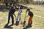 planting trees to diversify overgrazed land in central Texas