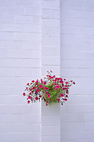 Flower basket on white cinder block wall. Halfway, Oregon.