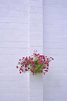 Flower basket on white cinder block wall. Halfway, Oregon.