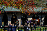 November 4, 2020: Scenes from around the track as horses prepare for the 2020 Breeders' Cup at Keeneland Racetrack in Lexington, Kentucky on November 4, 2020. Scott Serio/Eclipse Sportswire/Breeders Cup